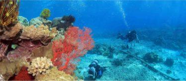 """海を愛する私が環境問題と同じくらい興味を持った""""保険のイメージ""""を変える仕事"""